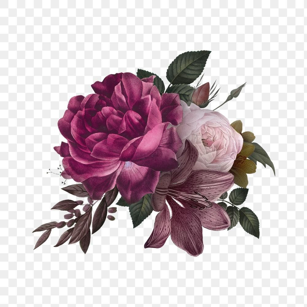 Download Premium Png Of Beautiful Hand Drawn Pink Roses Transparent Png In 2020 Rose Flower Png Colorful Roses How To Draw Hands