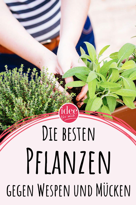 Diese Pflanzen Vertreiben Wespen Und Mucken Pflanzen Gegen Mucken Pflanzen Hausmittel Gegen Mucken