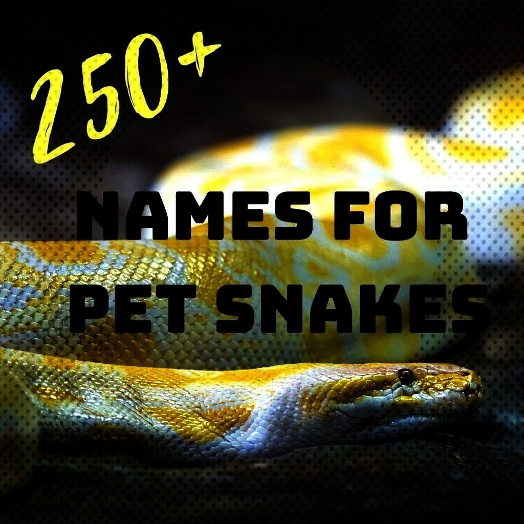 snakes Are you looking for the perfect name for your new companion Choose from funny Do you love snakes Are you looking for the perfect name for your new companion Choose...