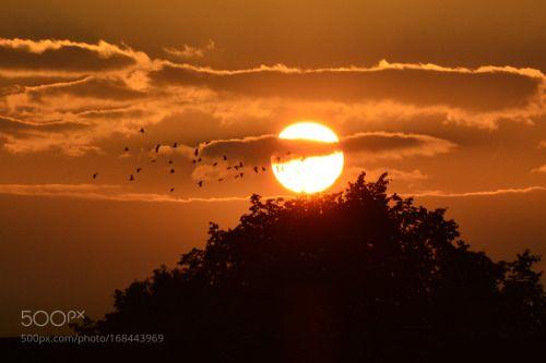 Happiness by katherinesweeney  sky clouds treetops Sunsetting Sun Glasgow Govan Happiness katherinesweeney
