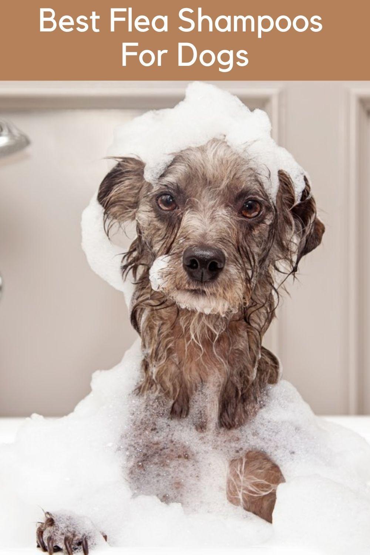 Top 9 Best Flea Shampoos For Dogs 2020 Review In 2020 Flea