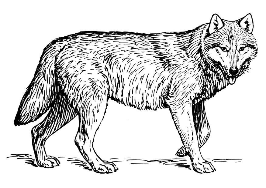 Kleurplaten Volwassenen Wolf.Afbeeldingsresultaat Voor Wolf Kleurplaat Voor Volwassenen