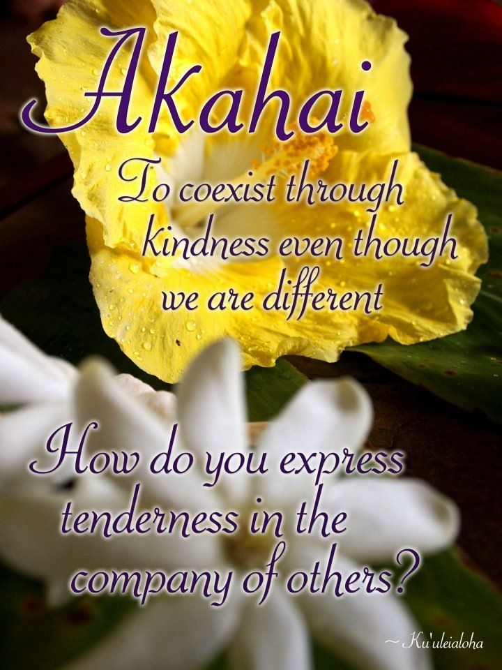 Akahai meaning kindness to be expressed with tenderness