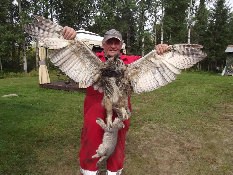 Great Horned Owl Eat Small Dogs