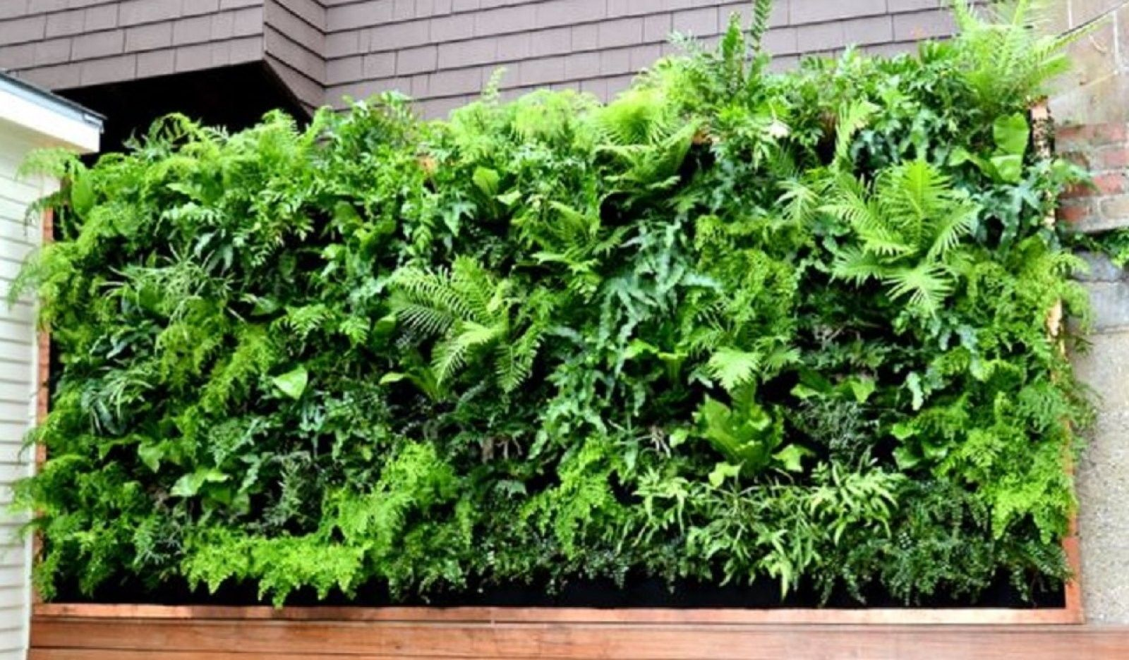 Ideas que mejoran tu vida | Terrarios - plantas - huerta | Pinterest ...