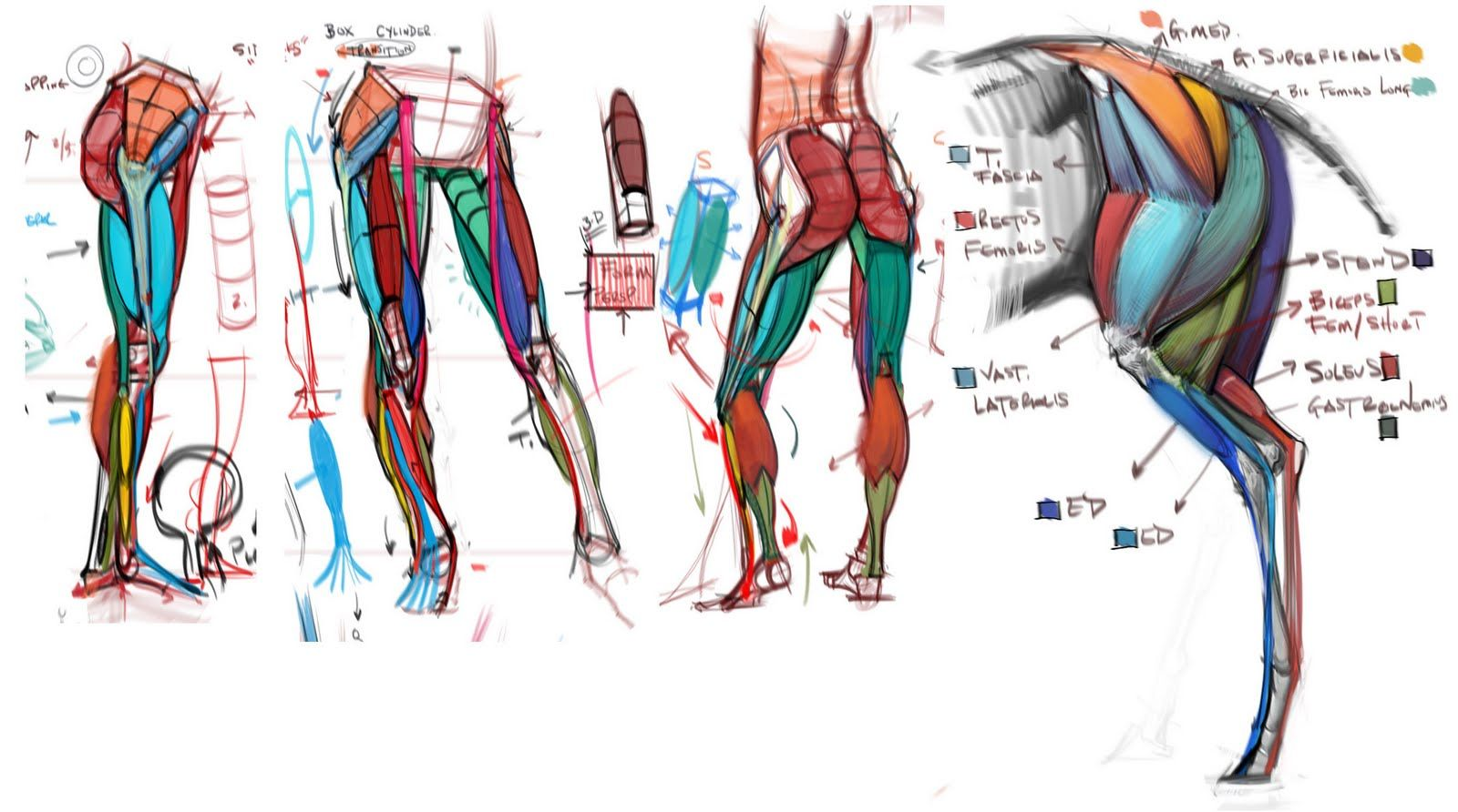 figuredrawing.info_news | Anatomia | Pinterest | Anatomy, Animal ...
