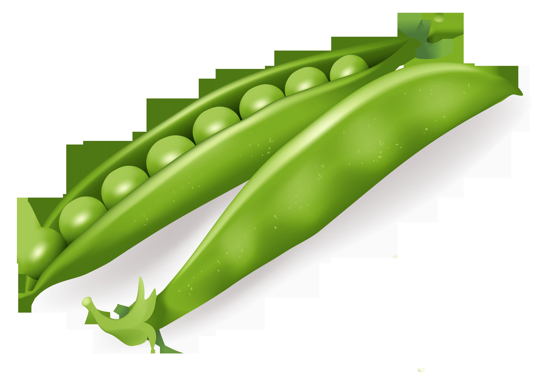 Pea PNG Image Pea pods, Peas, Clip art