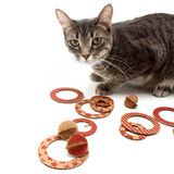 Flips - Eco-friendly Flying Disc Cat Toys (2 sheets)