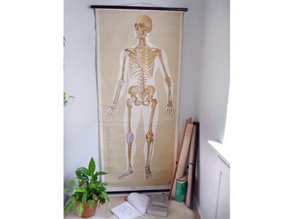 Vintage Anatomy school chart XXL human SKELETON Educational German ...