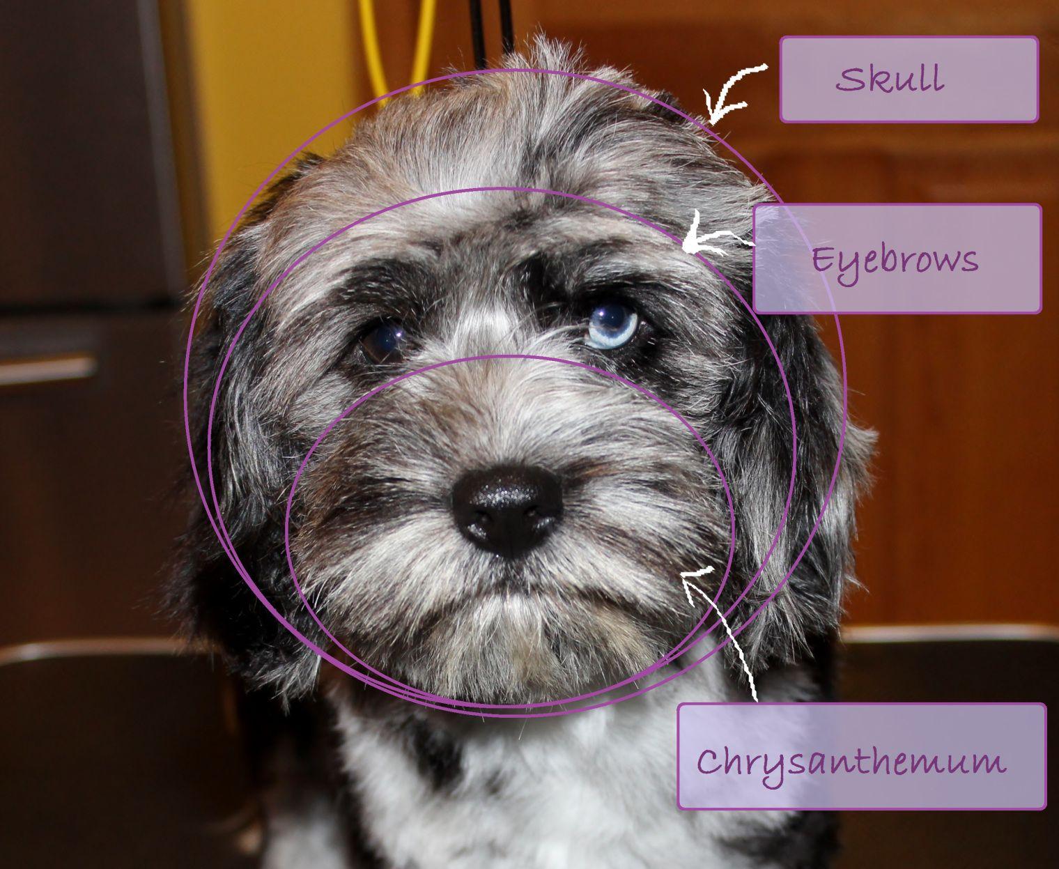 anatomy - all terms | Animals | Pinterest | Anatomy, Pet grooming ...