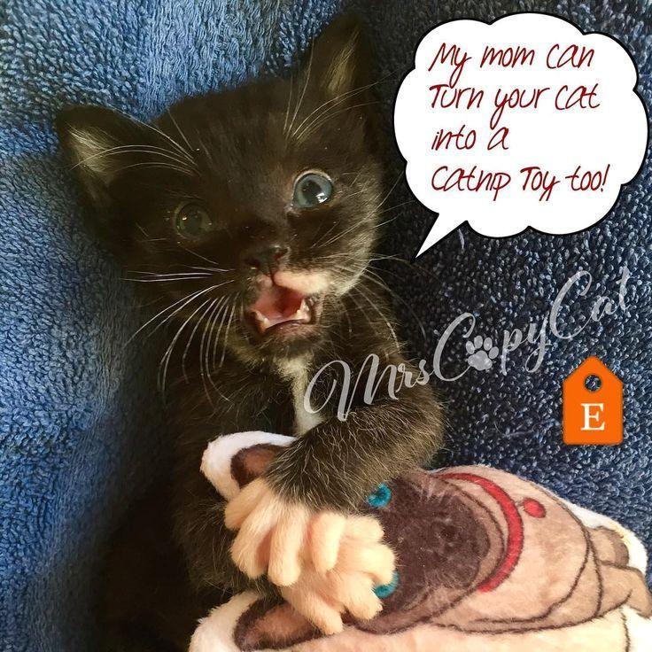 #customtoy  #catniptoy  #kittentoys  #cattoys  #cattoy  #catart  #catportrait  #catdrawing  #cutecat  #cutekitten  #cutekitty  #catsofinstagram  #catoftheday  #kittenoftheday  #toyoftheday  #postoftheday  #cutestkitty  #smilingcat  #laughingcat  #blackcat  #blackkitty  #tuxedokitten  #tuxedocat  #mrscopycat  #etsyshop   #instaart @caragirl73 #YOUR #into My mom can turn YOUR cat into a catnip toy too!