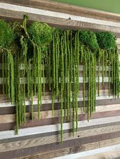 Photo of Vertical gardens cafe #vertical #gardens – vertikales gartencafé – café des ja…