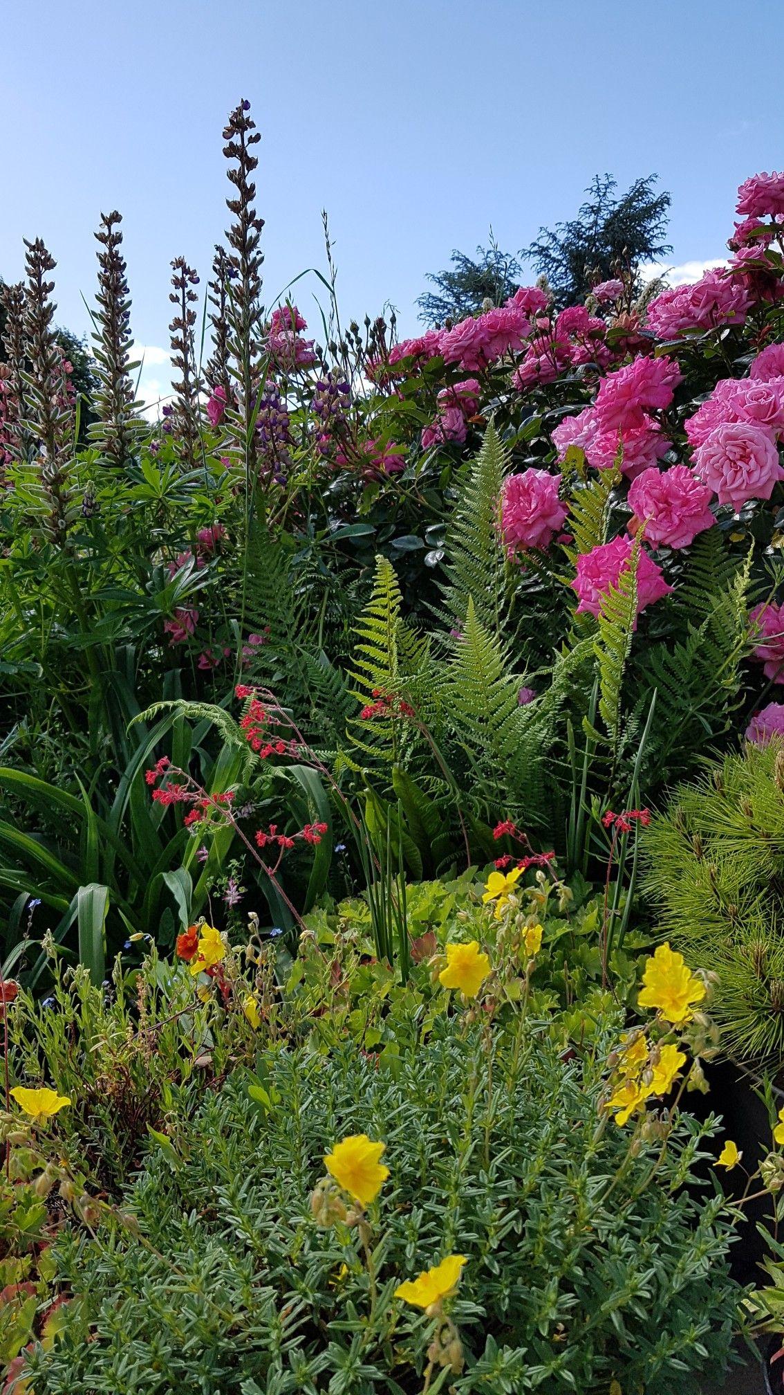 Le Jardin Du Blog Esprit Laita Jardins Idees Jardin Jardinage