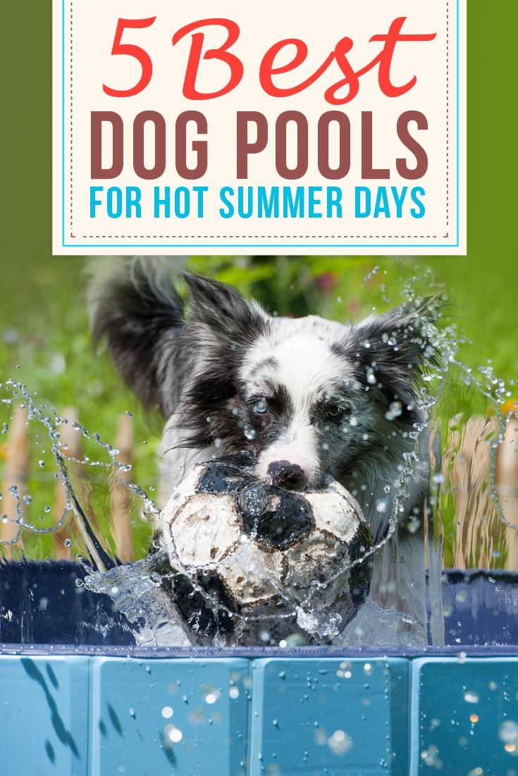 The 12 Best Dog Pools For Summer Dog Training Dogs Dog