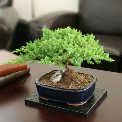 gotta be the smallest bonsai i ve ever seen bonsai bonsai rh pinterest com