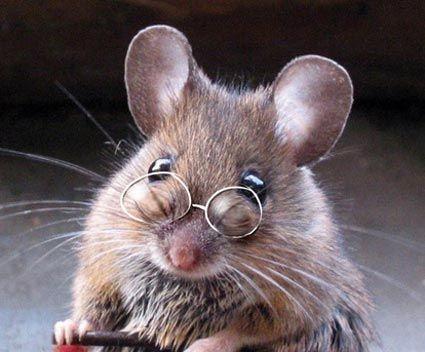 gekke dieren - google zoeken   raare dieren   Животные