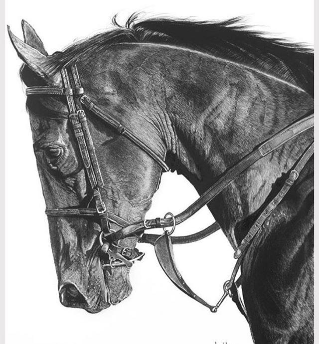 The latest masterpiece by @lewbrennanartist #speechless #charcoal #art #drawing #realism #equis #americanpharoah #racing