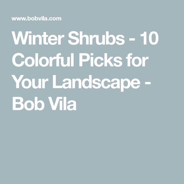 Winter Shrubs - 10 Colorful Picks for Your Landscape - Bob Vila