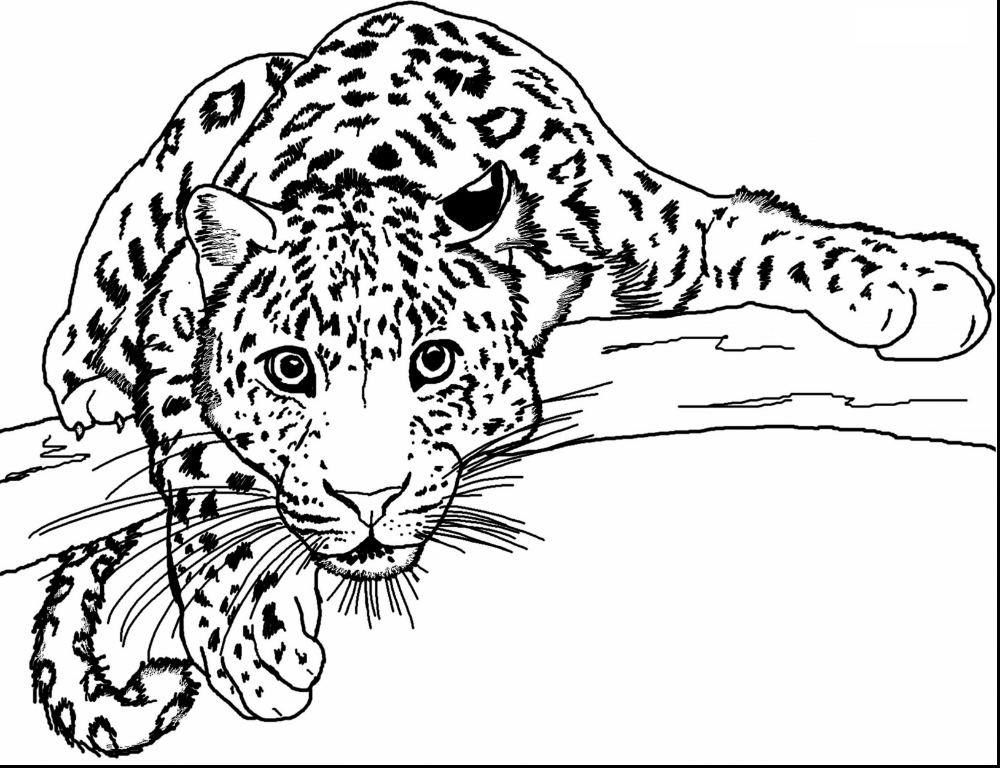 Printable Cheetah Coloring Pages K5 Worksheets Zoo Animal Coloring Pages Leopard Drawing Cheetah Drawing