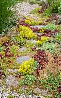 Gravel garden with granite stepping stonesPlant inclde Miscanthus