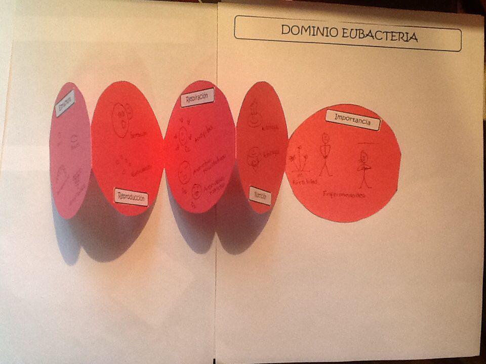 Los alumnos colocan en cada círculo del estreptococo una característica