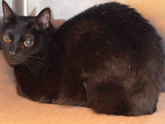Super Urgent Manhattan Bluebell A1101987 Female Black White