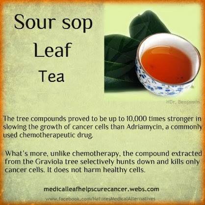 Sour Sop leaf / Graviola cancer killer tea labels Pinterest