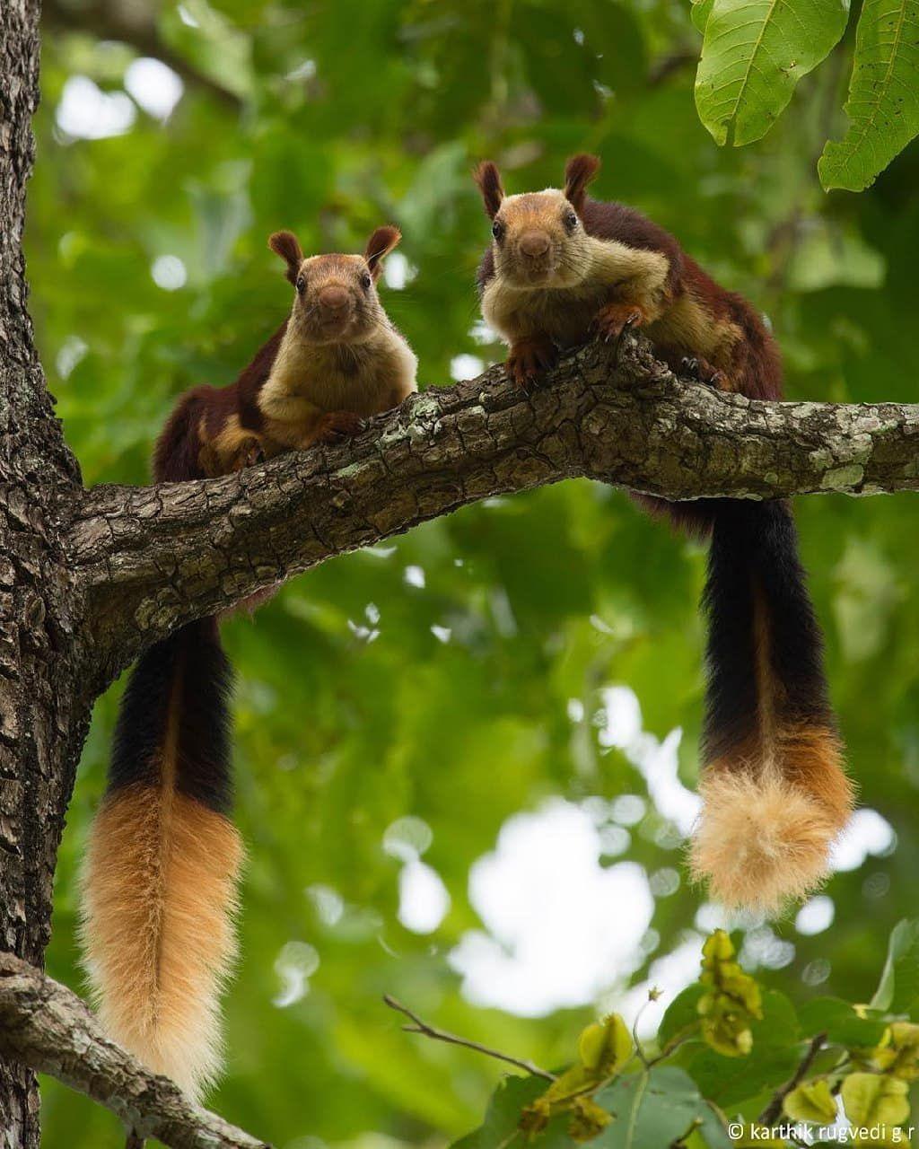 We Re Watching You Giant Squirrel Pet Birds Animals