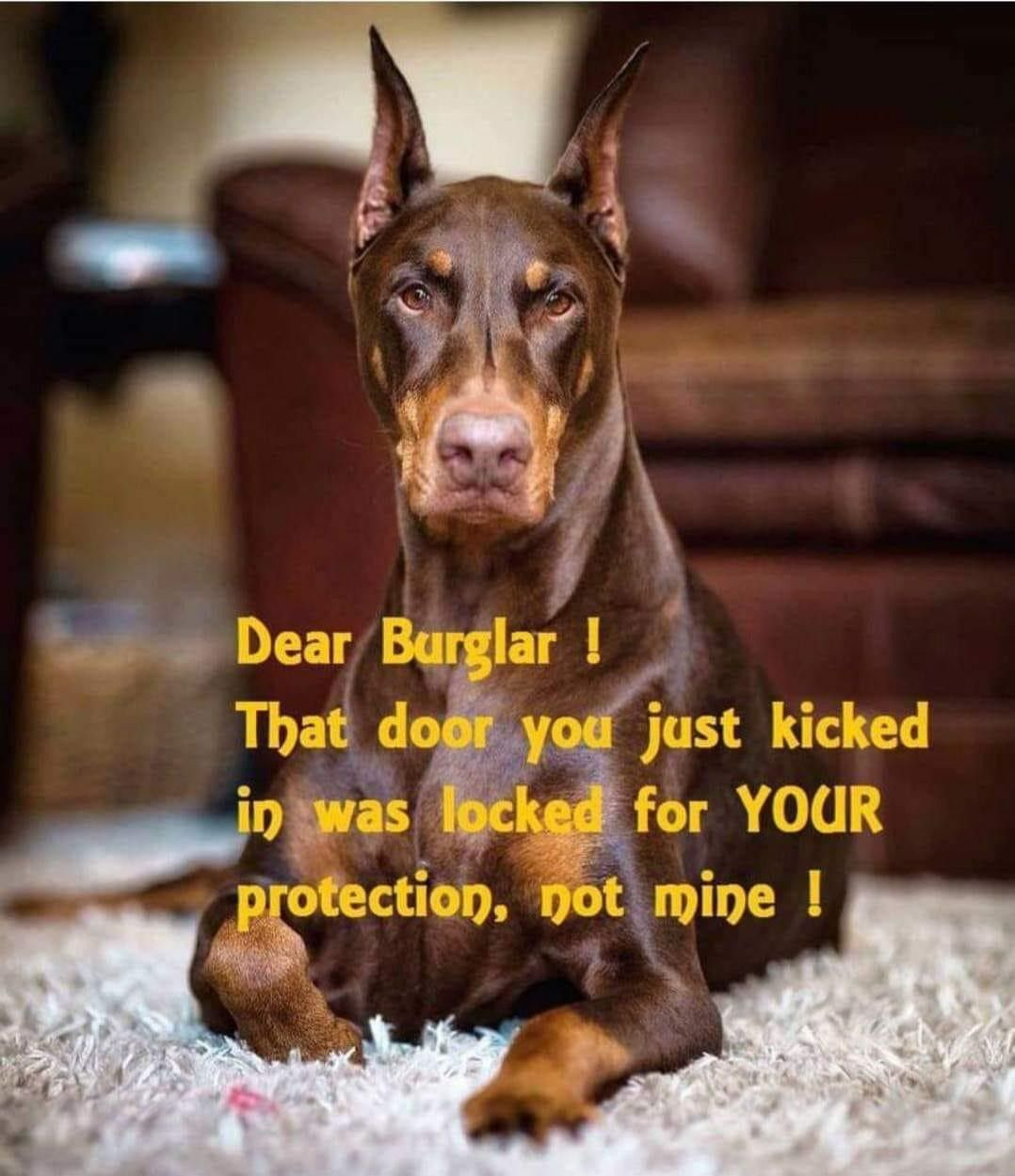Funny Image By Brenda Van Zyl Funny Dog Memes Dog Memes Sick