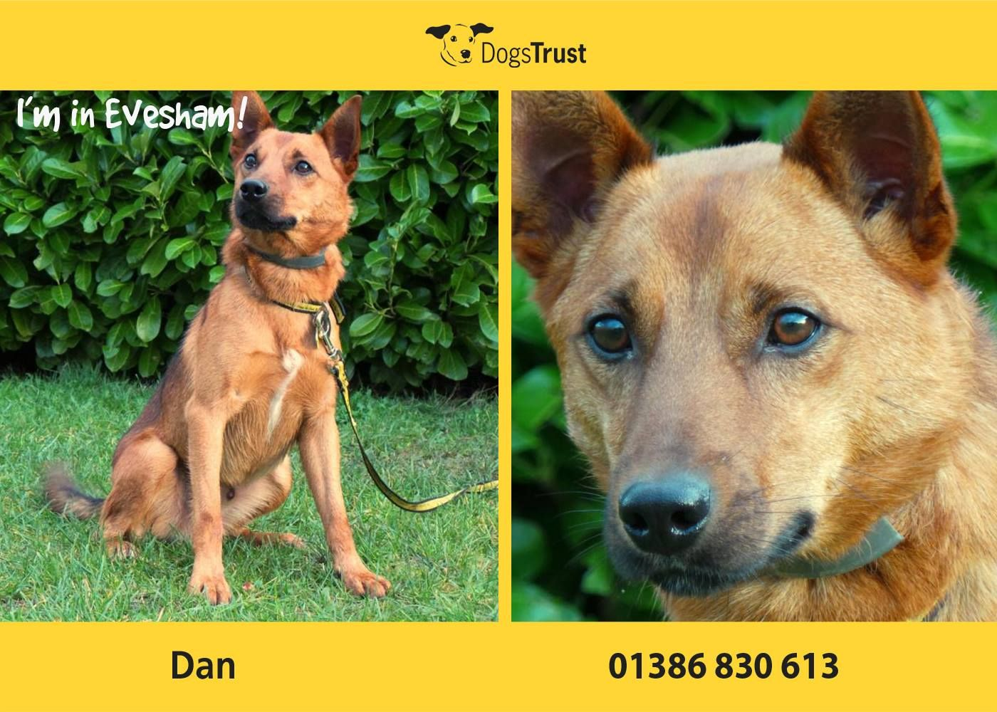 Dan At Dogs Trust Evesham Is Currently Feeling Rather Unsure Of
