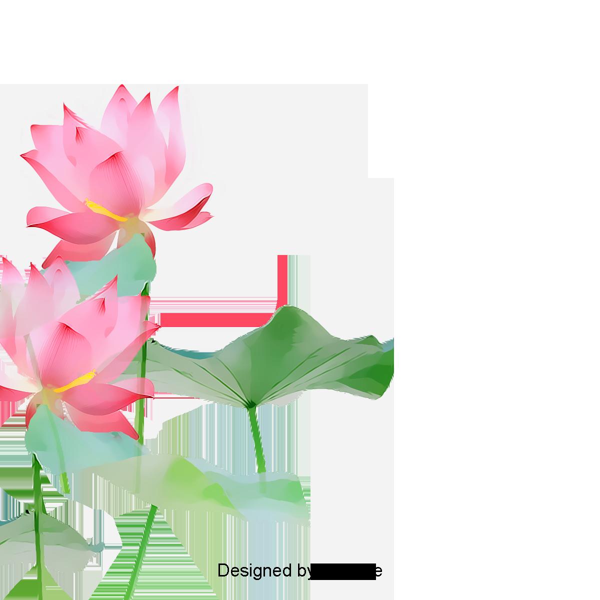 Lotus Flowers, Lotus Clipart, Flowers, Lotus PNG