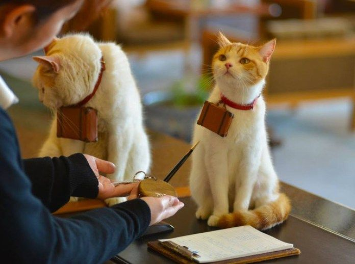 Cats are the Cutest Adventurers of Japan a7by a7by