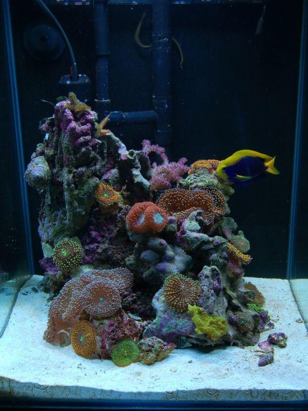 How to setup a nano tank aqurium for Aquarium nano marin