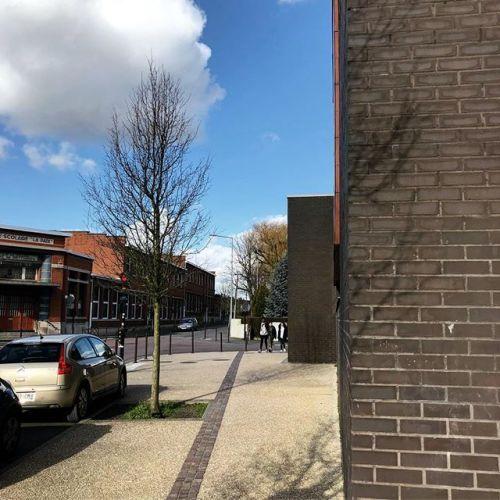 Des arbres partout #arbre #nature #ville #street #rue #ombre...