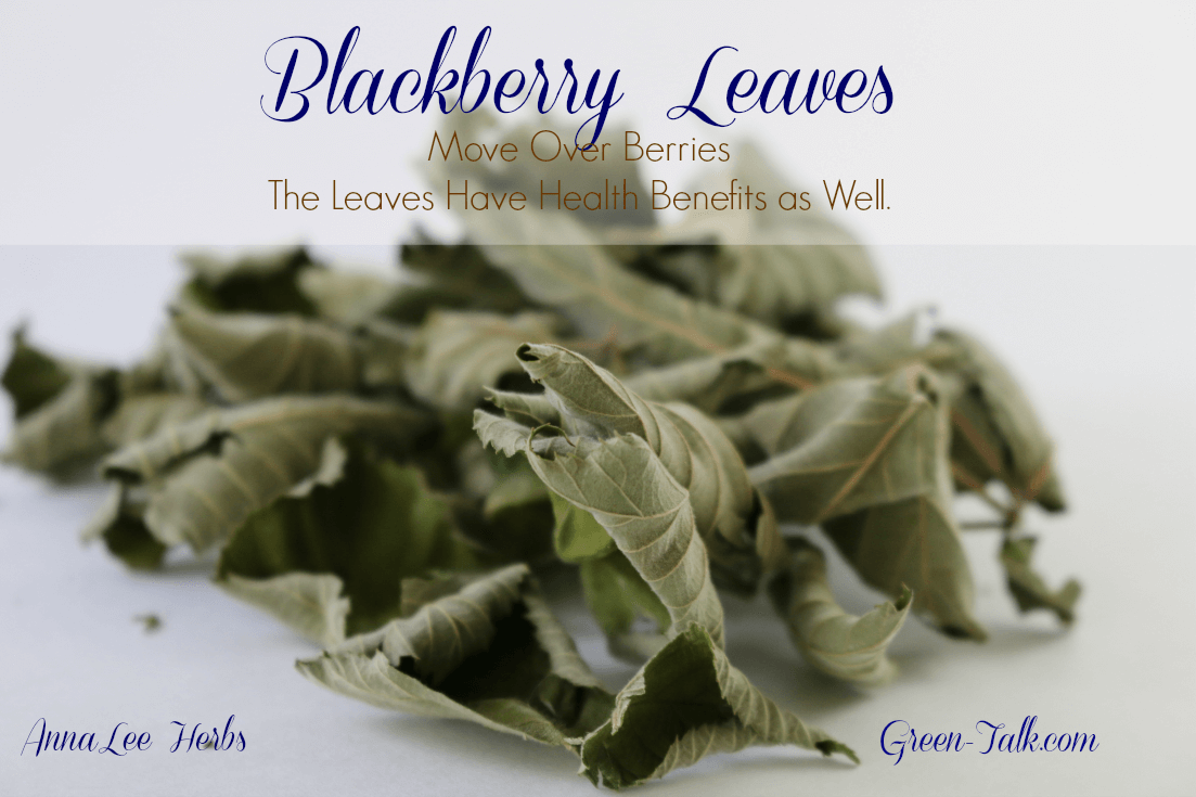 Blackberry leaves are not simply window dressing for blackberries.  They have healthy attributes as well and help in healing certain ailment.  Read on.