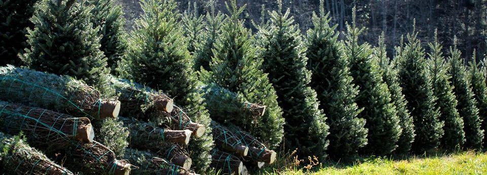 Christmas Tree Farm Virginia Beach Ideas