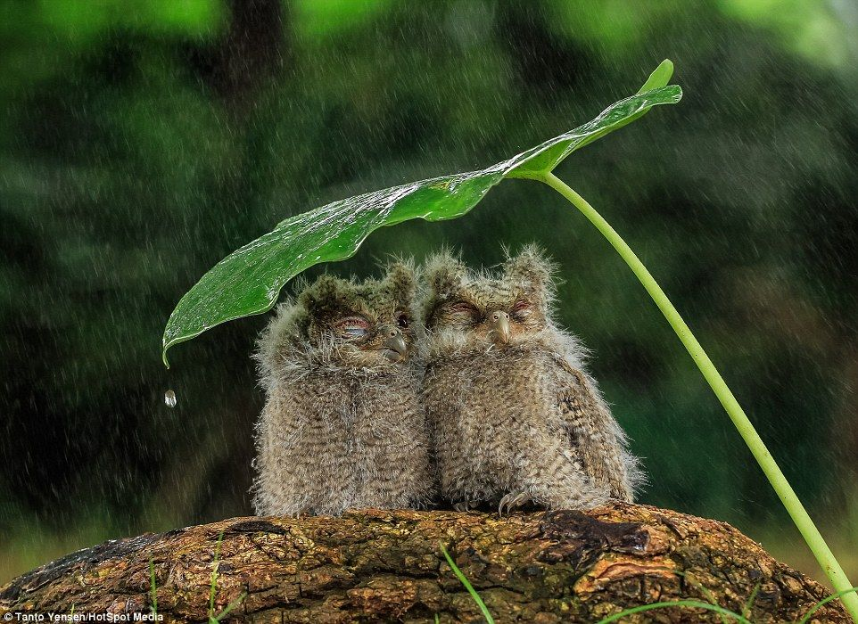 This is torrentiOWL Birds huddle together using a leaf