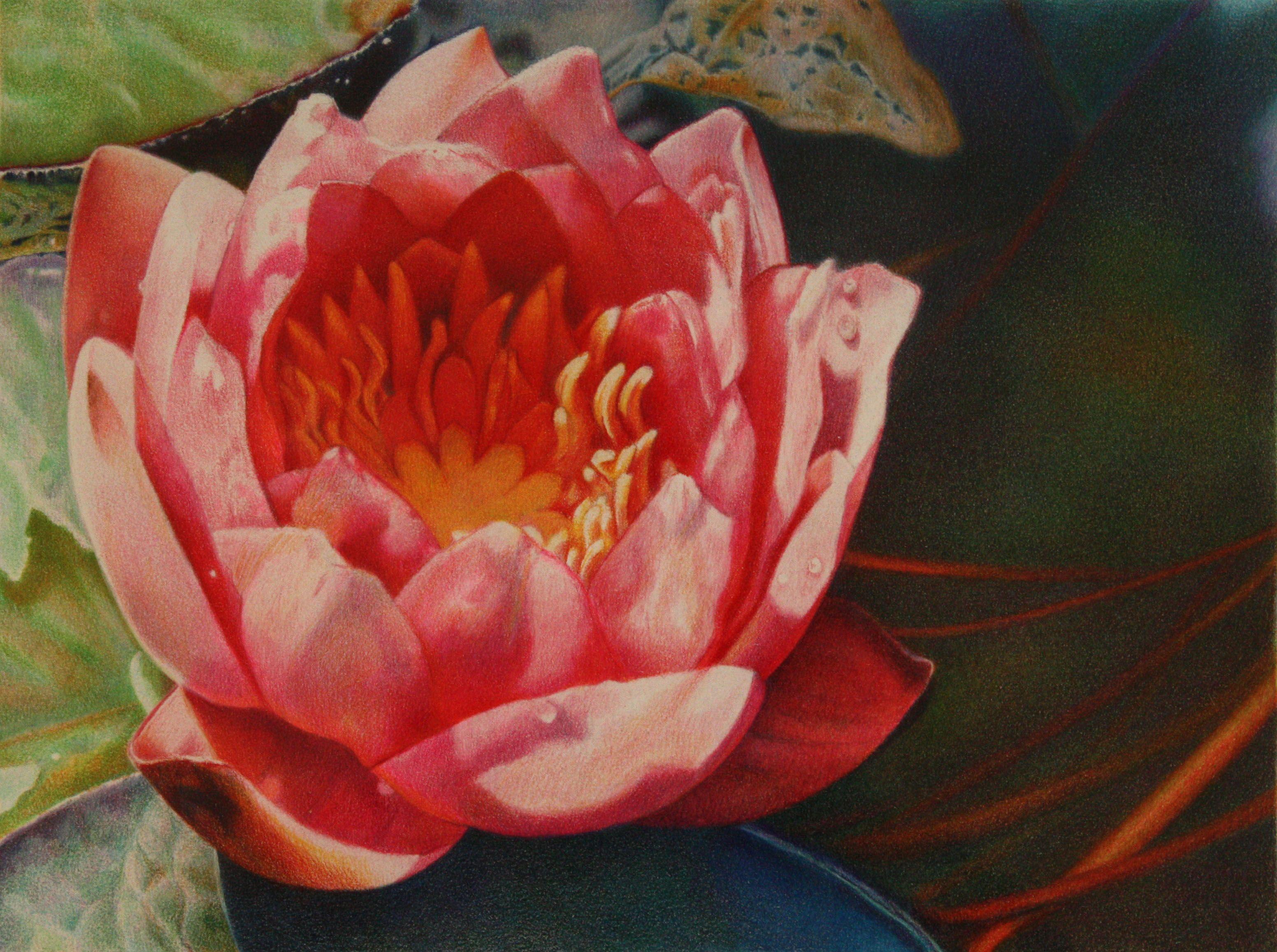 Pink Waterlily Colored pencil drawing Rhonda Bartoe Tucker | My Art ...