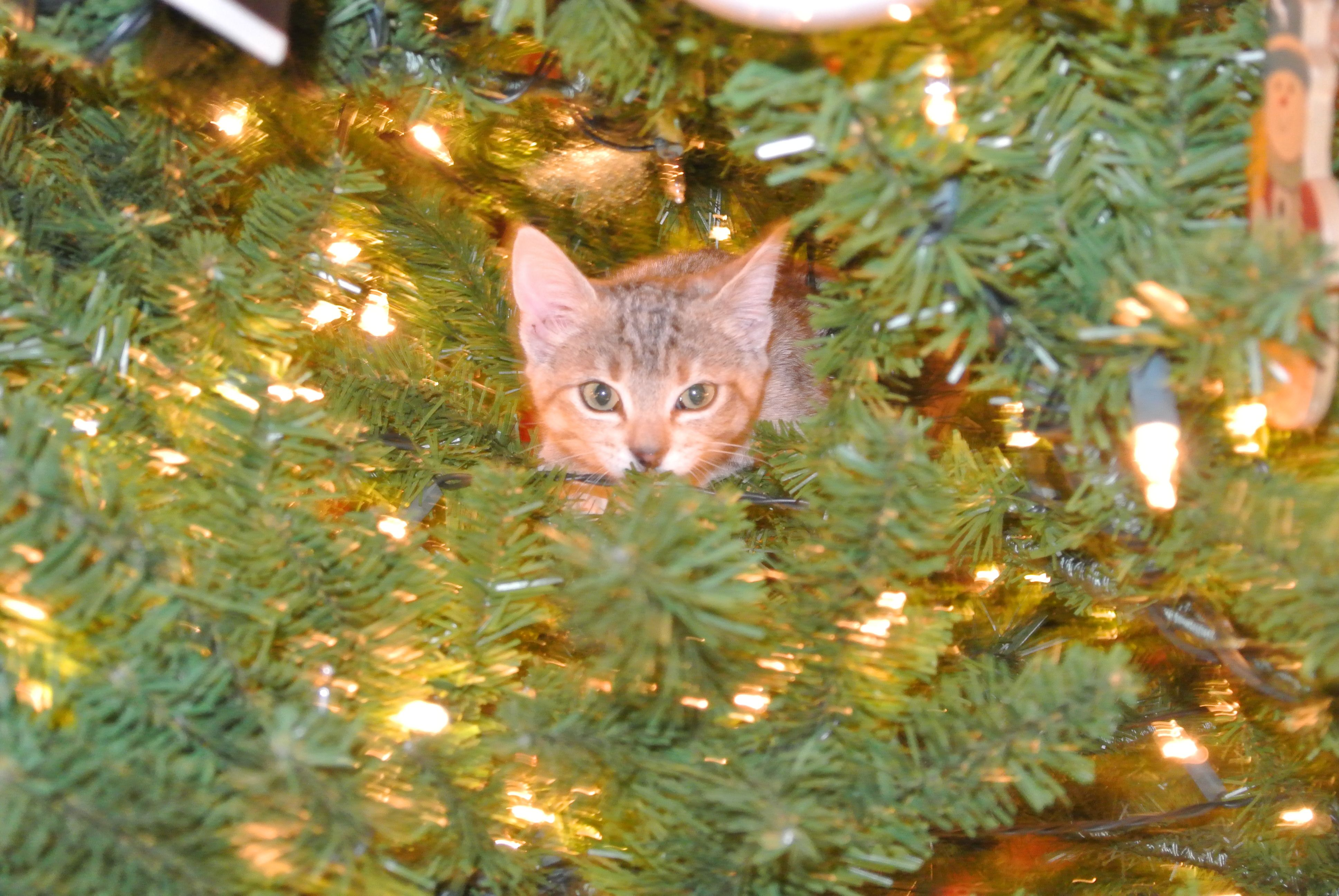 Ries enjoying the Christmas tree. alyssa is too lucky i got her ries
