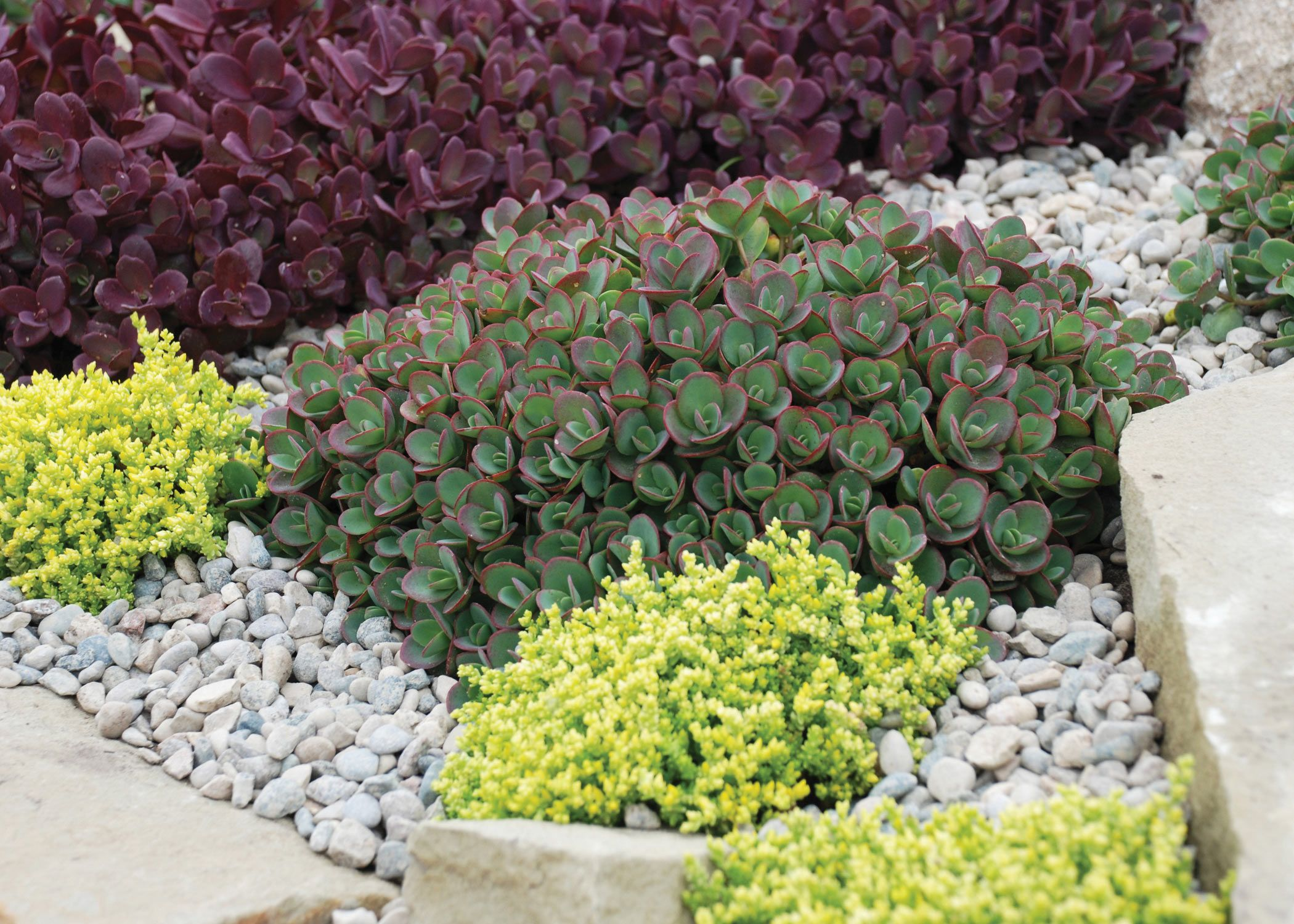 Glorious Ground Covers! | Wisconsin Gardening Web Articles