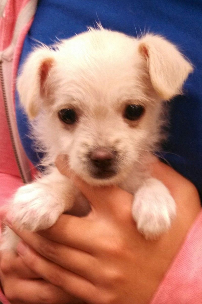 Adopt Bitsy on Cute dogs, Fluffy puppies, Cute puppies