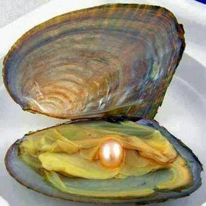 La ostra con perla. The oyster whit pearl..