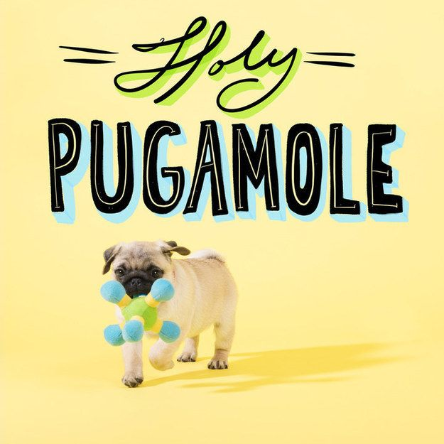 Pug Puns That Will Brighten Your Day Pugs Pugs Kisses Teach