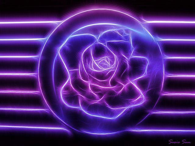 Purple Neon Rose In 2019 Neon Room Neon Purple Neon