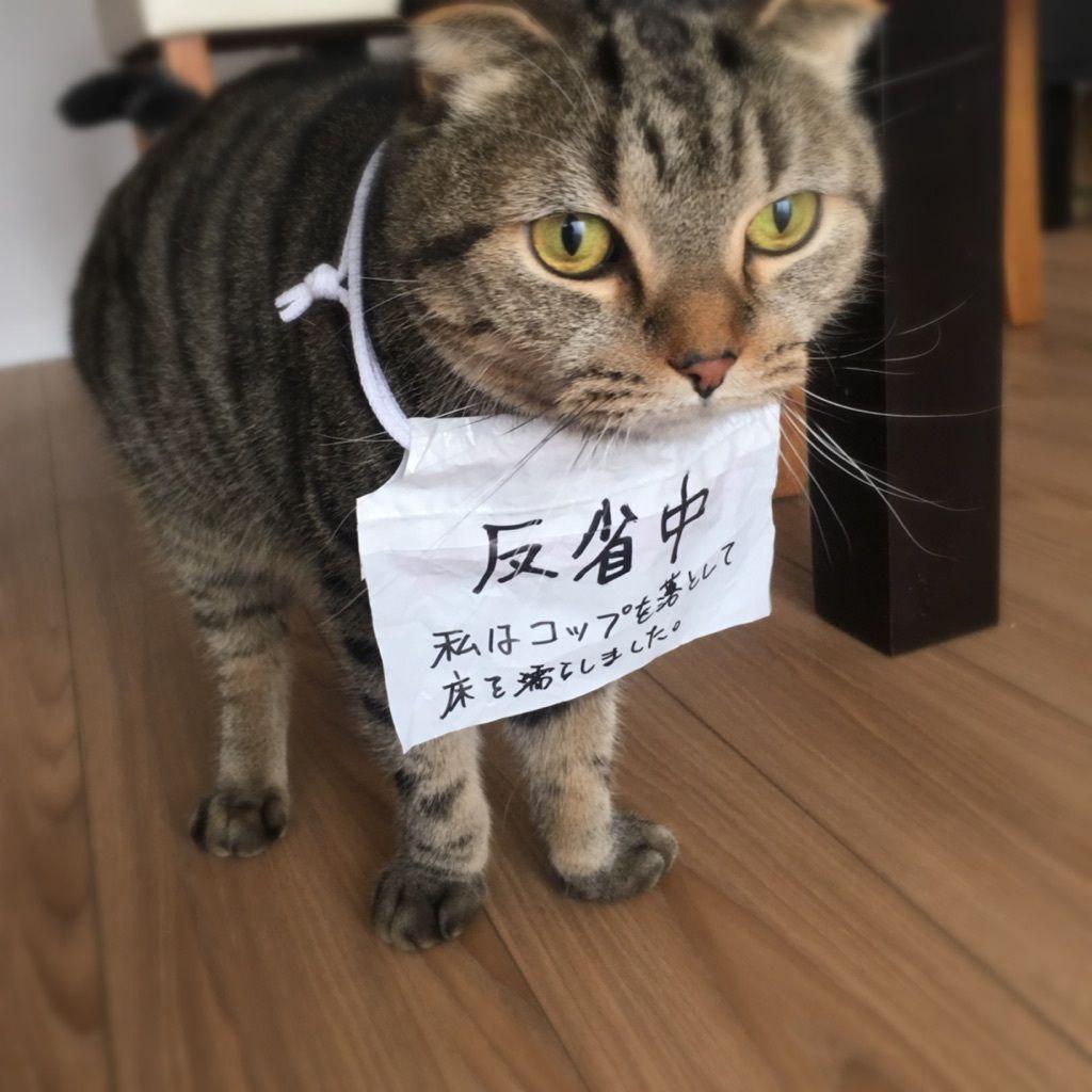時々にゃんバカ 反省 してるわけないニャン Baila 反省猫 猫 子猫 面白い猫