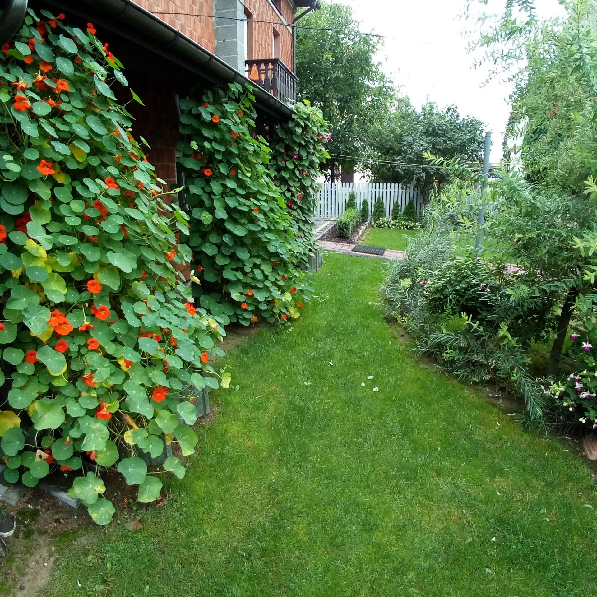 Nasturcja Pnaca Fot Monika Mroczkowska Prawa Autorskie Do Zdjec Twojogrodek Pl Plants Garden