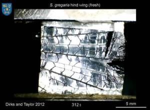 thin and tough: Why don't insect wings break?Transparent, thin and tough: Why don't insect wings break?