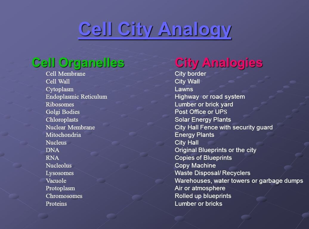 Cell Cityogy Worksheet Cell Organelles Unit 2 Cells