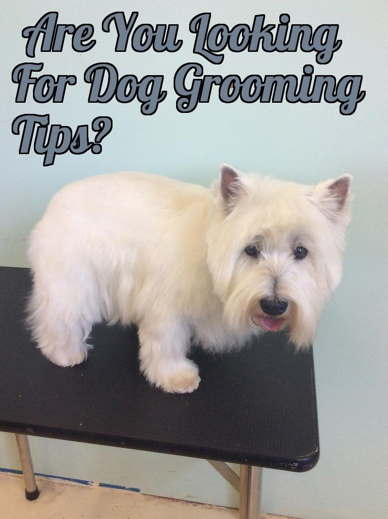 Most Preferred 5 Dog Grooming Tips Dog Grooming Tips Dog