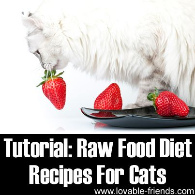 Raw food diet recipes for cats httplovable friends raw food diet recipes for cats httplovable friendsraw food diet recipes for catsip forumfinder Choice Image